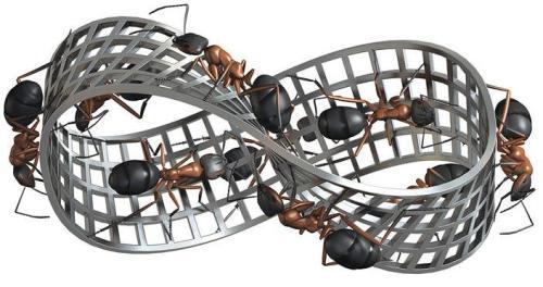Robert Lea - Termitas de Escher