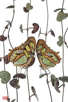 Stéphane Hette - Papillon Hanashikomu