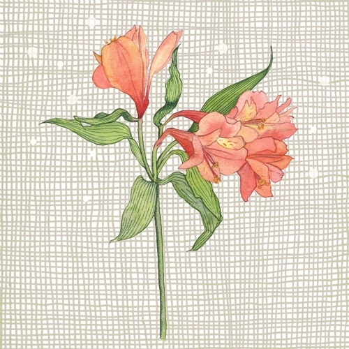 Sue Brown - Persian lily revisited (www.whatidoisme.wordpress. com)