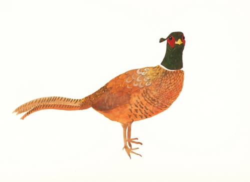 Sue Brown - Common pheasant (www.whtidoisme.wordpress.com)