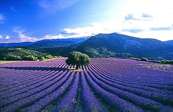 provence_tourisme_contenu402